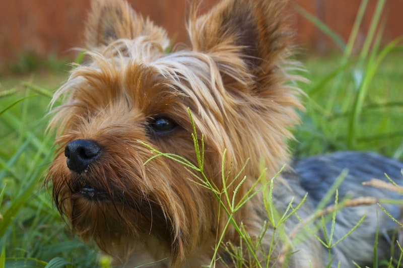 FLEA, TICK, & HEARTWORM PREVENTION